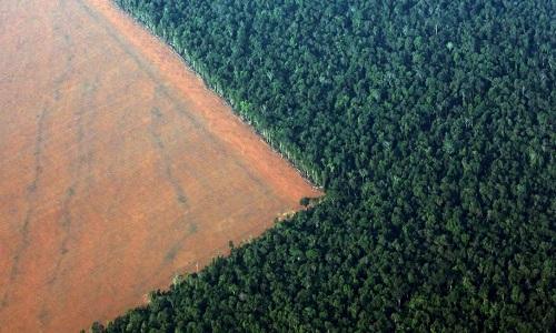 LIMINAR BLOQUEIA R$ 4,5 MI DE DESMATADOR DA AMAZÔNIA EM MG