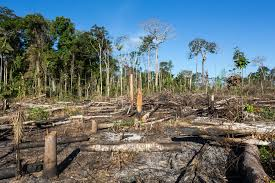 BRASIL É UM DOS PAÍSES QUE MAIS DESTROEM FLORESTAS, AFIRMA WWF