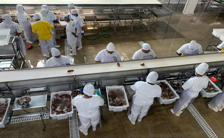 SETOR DE PESCADOS PREVÊ INVESTIMENTOS DE R$ 214,6 MI NA BAHIA