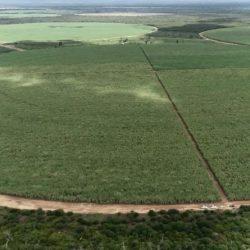 IMPLANTAÇÃO DO POLO AGROINDUSTRIAL E BIOENERGÉTICO AVANÇA NA BAHIA